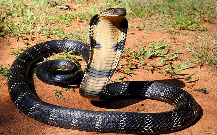 15-deadliest-snakes-on-earth_10