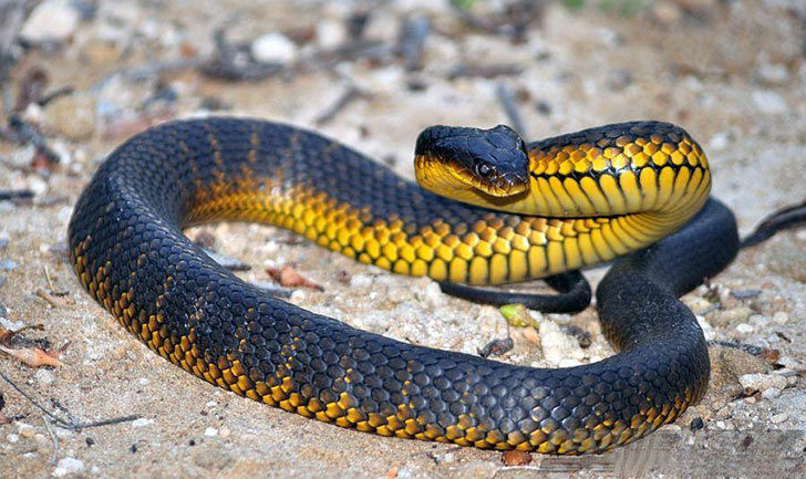15-deadliest-snakes-on-earth_3
