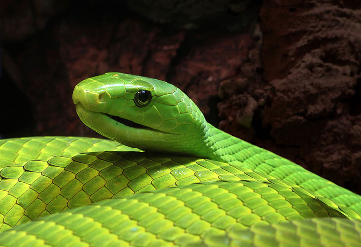 15-deadliest-snakes-on-earth_6