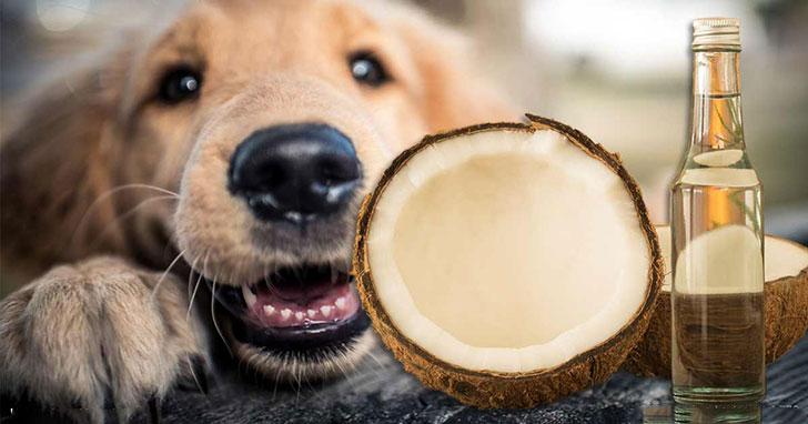 椰子油的15种难以置信的好处