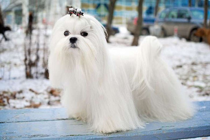 15-most-elegant-dog-breeds-as-your-noble-companion_2