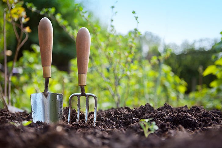 20-simple-gardening-tricks-for-beginners_1