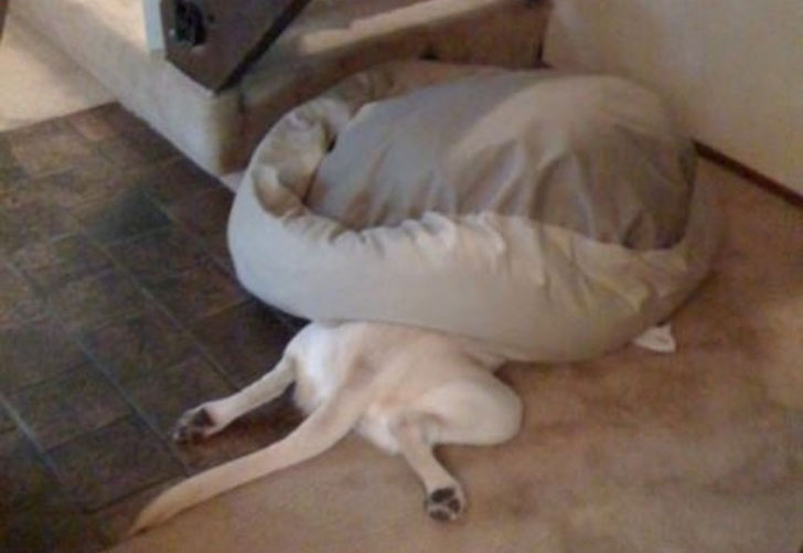 21-adorable-dogs-sleeping-in-hilarious-positions_12
