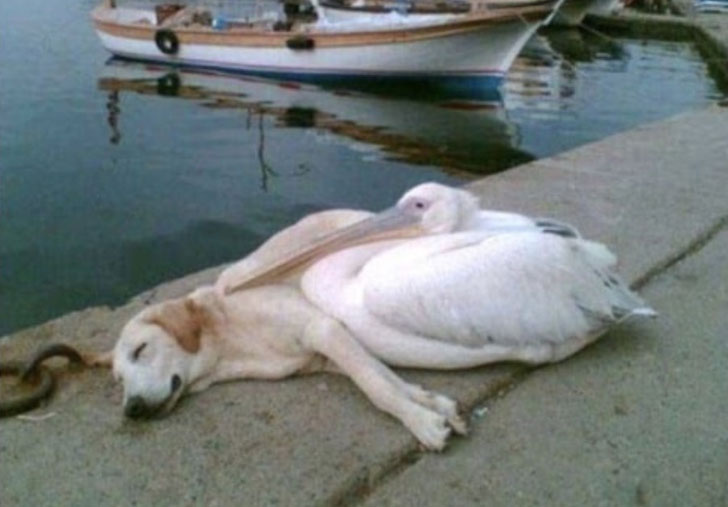 21-adorable-dogs-sleeping-in-hilarious-positions_19