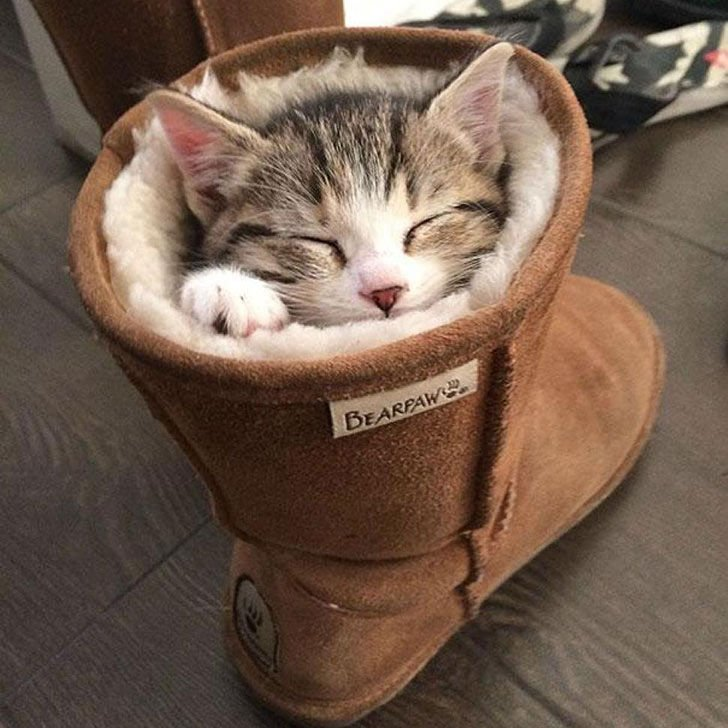 21-funny-pics-that-prove-cats-dont-need-beds_4