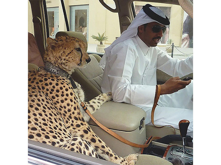 land-of-the-rich-15-crazy-things-that-you-only-see-in-dubai_1