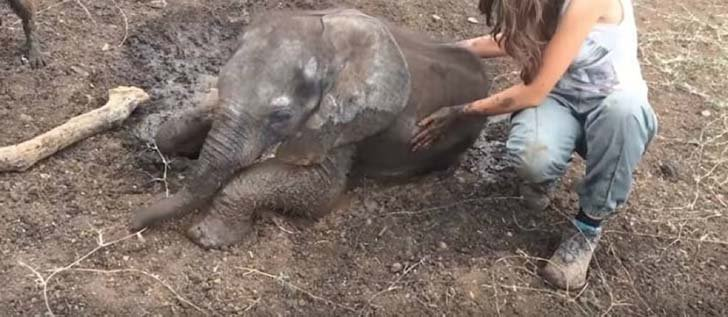 orphaned-baby-elephants-unlikely-yet-heartwarming-friendship_13