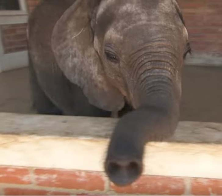 orphaned-baby-elephants-unlikely-yet-heartwarming-friendship_2