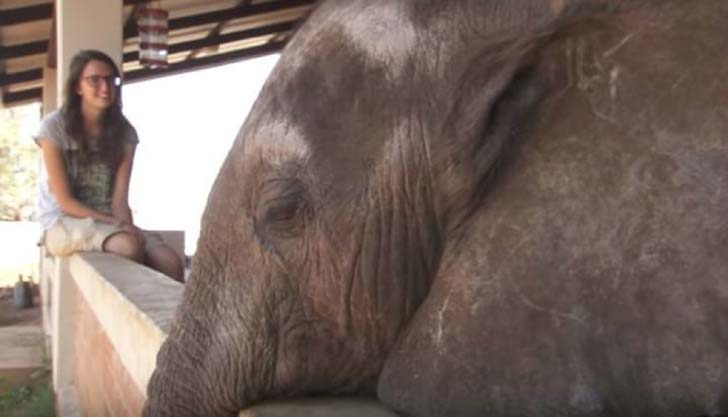 orphaned-baby-elephants-unlikely-yet-heartwarming-friendship_4