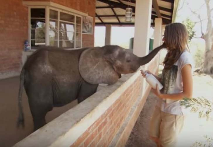 orphaned-baby-elephants-unlikely-yet-heartwarming-friendship_5