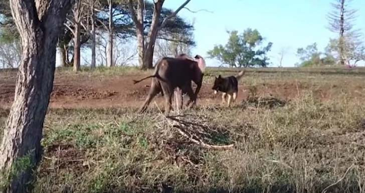 orphaned-baby-elephants-unlikely-yet-heartwarming-friendship_9