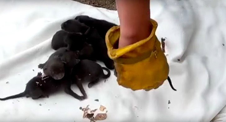 puppies-rescued-by-firefighters-arent-actually-dogs_16
