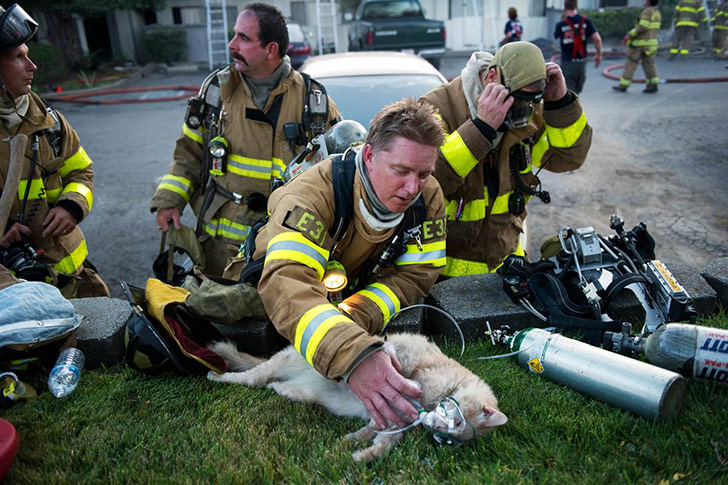 puppies-rescued-by-firefighters-arent-actually-dogs_5