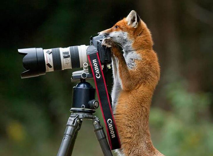 the-funniest-wildlife-photobombs-captured-by-photographers_11