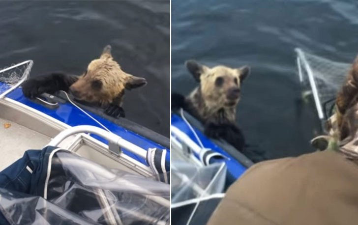 two-bear-cubs-left-to-drown-by-their-mother-are-miraculously-saved-by-unexpected_10