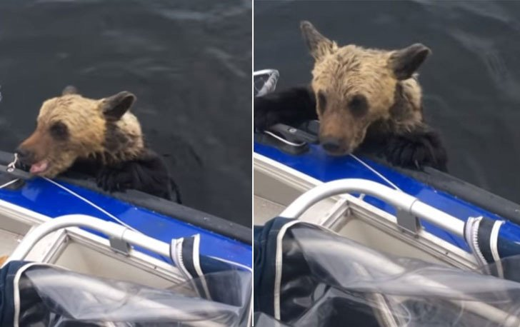 two-bear-cubs-left-to-drown-by-their-mother-are-miraculously-saved-by-unexpected_11