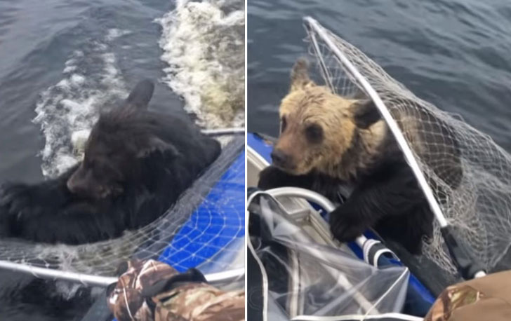two-bear-cubs-left-to-drown-by-their-mother-are-miraculously-saved-by-unexpected_13