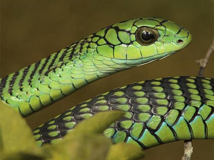 15 Deadliest Snakes On Earth